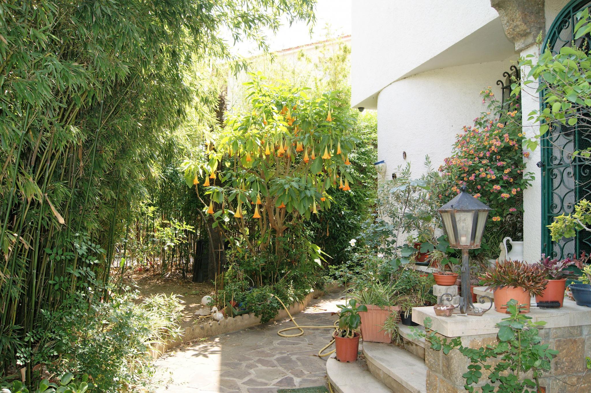 jardin devant l'entrée de la maison